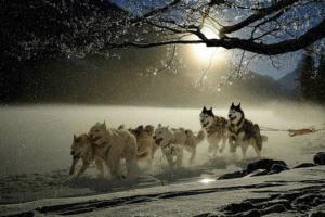 16 Outdoor Winter Activities to Enjoy in the Nordic Countries